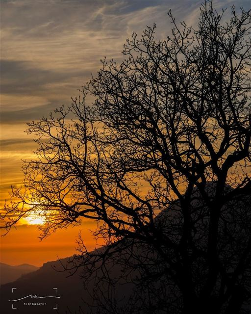 Warm sunset an old tree and a perfect... (Bcharreh, Liban-Nord, Lebanon)